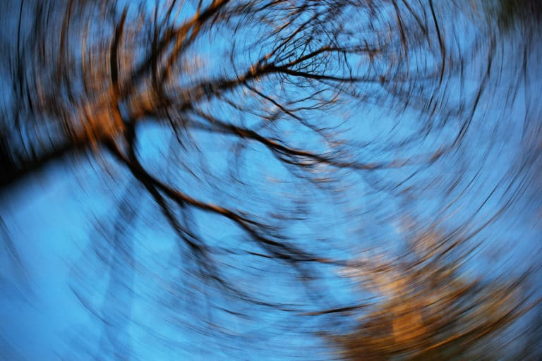 Looking up at trees spinning