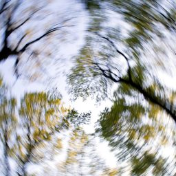 A spinning or dizzy photo of tree tops