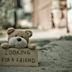 looking-for-a-friend-bear